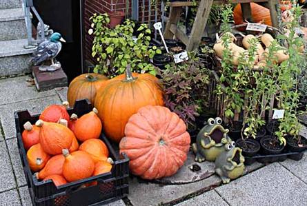 Britta Lauruschkat hat es sich in der Gastfeldstrasse 109 zur Aufgabe gemacht, fast vergessene Nutz- und Kulturpflanzen zu erhalten.