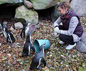Im Gehege beäugen mich die Humboldt-Pinguine neugierig. Ich denke an meinen Kindheitstraum: Tierpflegerin.