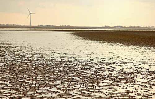 Watt'n dat? Bei Ebbe kann aus dem Nordseebadespaß schon mal ein Schlammbad werden. (Foto: Rike Oehlerking)